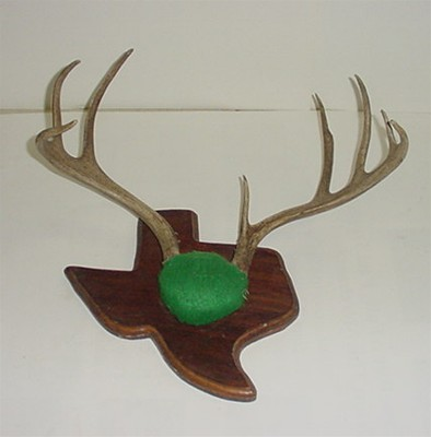 Whitetail Antlers on Plaque